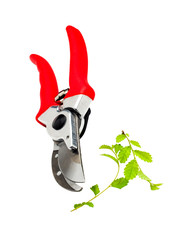 Plant is pruning by pruning shears