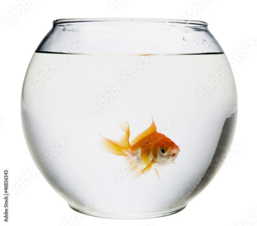 Fish in fishbowl