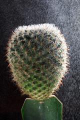Single cactus in the rain against black background.