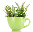 fresh mint with flowers in cup, isolated on white