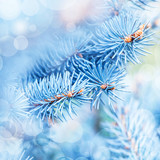 Fototapety Frozen fir tree background