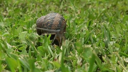 улитка в траве