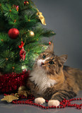 cat and christmas