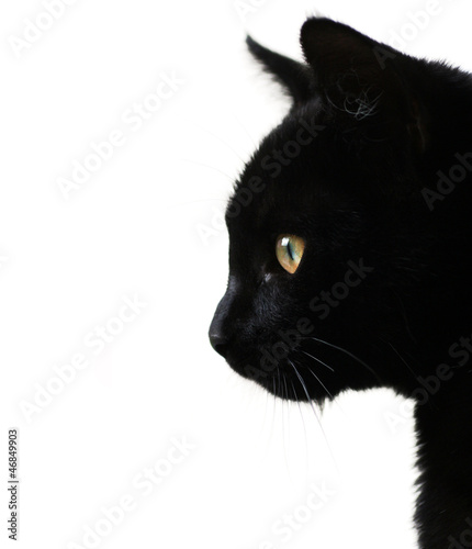Black cat on white