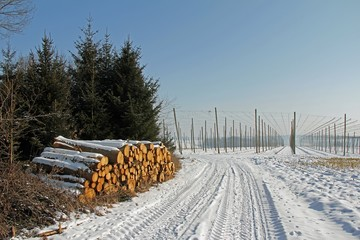Hopfenfeld und Holzstapel