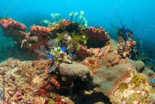 Leinwandbilder,abenteuer,aquarium,asien,ashtray