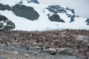 Rocky beach with penguins in Antarctica