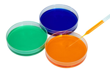 Colorful fluid in dishes for laboratory use