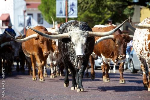 Aluminium Koe Texas Longhorns