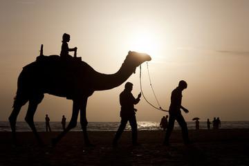 A girl riding a camel at sunset