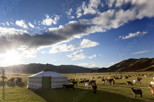 The sun rises in the Orkhon Valley while lambs graze freely