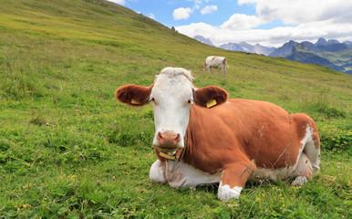 pascolo alpino - alpine pasture