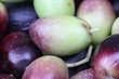 olive macro