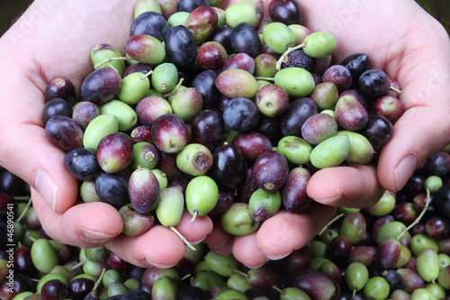 olive mani