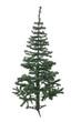 An isolated Christmas tree