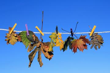 Den Herbst zum trocknen aufhängen