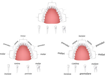 apparato dentale -dental apparatus