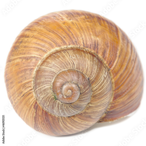 Roman Snail Shell Isolated on White Background - 46905131