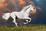 White horse runs on the dark sky background