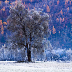 albero brinato