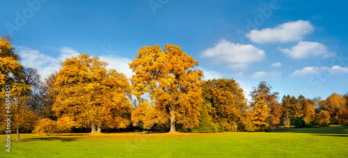 Panorama. Beautiful autumn trees.