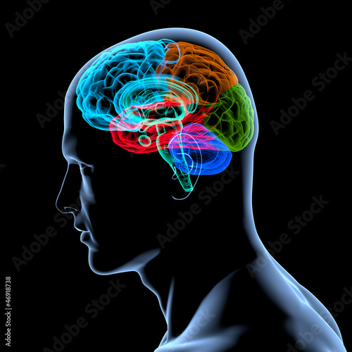 GamesAgeddon - Menschliches Gehirn - anatomisches Modell ...