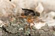 Shield bug on wood, macro photo
