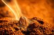 Grain roasted coffee aroma emitting