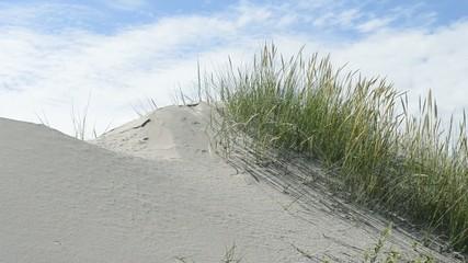 Sanddüne mit Bewuchs