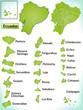 Übersichtskarte von Ecuador mit Grenzen