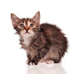 Wet kitten