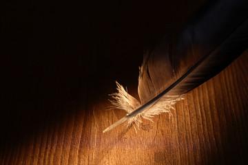 Feather On Dark