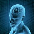 Menschliches Gehirn und Information