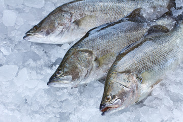 Fresh Seabass chilled on ice