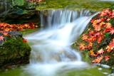 Fototapete Wasser - Bach - Bach / Fluss