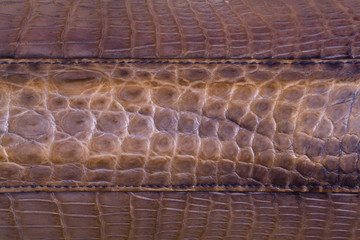 Freshwater crocodile skin texture background