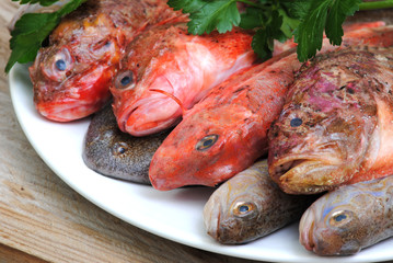 raw fishes on wood table with parsley