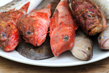 fresh red fishes
