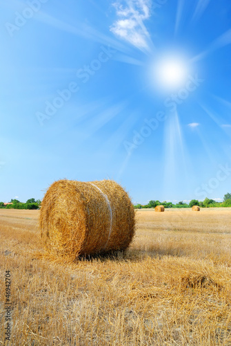 sun in the sky over the countryside in august