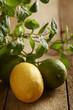 Green lime, yellow lemon and fresh mint