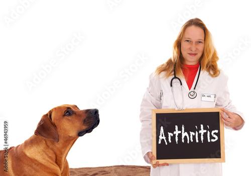 Tierärztin mit Hund und Schild - Arthritis