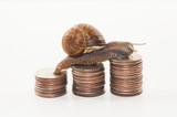 Snail on the coins - slow economy concept
