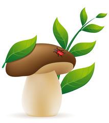 mushroom cep illustration