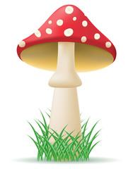 mushroom amanita illustration