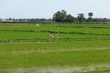 Landscape of a rice paddy field with a bicycle in Asia