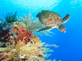Turtle and coral - 46969332