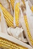 Montón de mazorcas de maíz seco con sus vainas