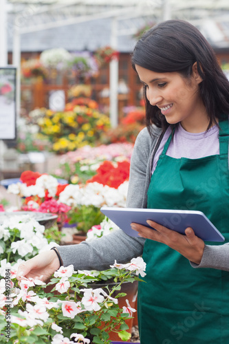 Employee choosing white flowers in garden center