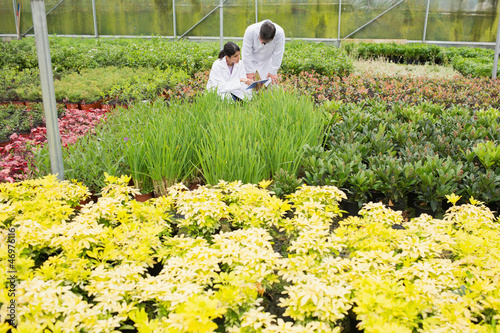 Two people in lab coats checking the plants