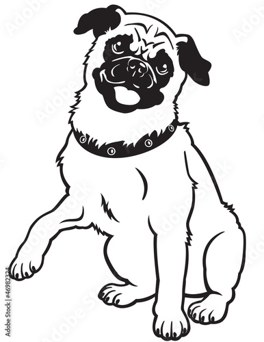 pug black and white